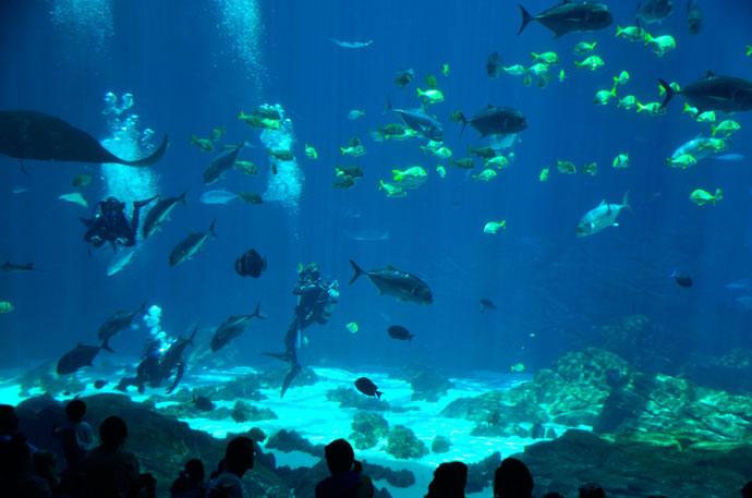 Pesci d 39 acqua salata per acquari contenuti gratis for Acquario acqua salata